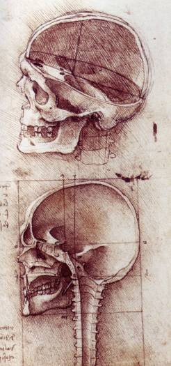 LEONRDO D VINCI: inúmeras contribuições ao desenvolvimento da Anatomia moderna (1489)