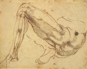 anatomy-leg2