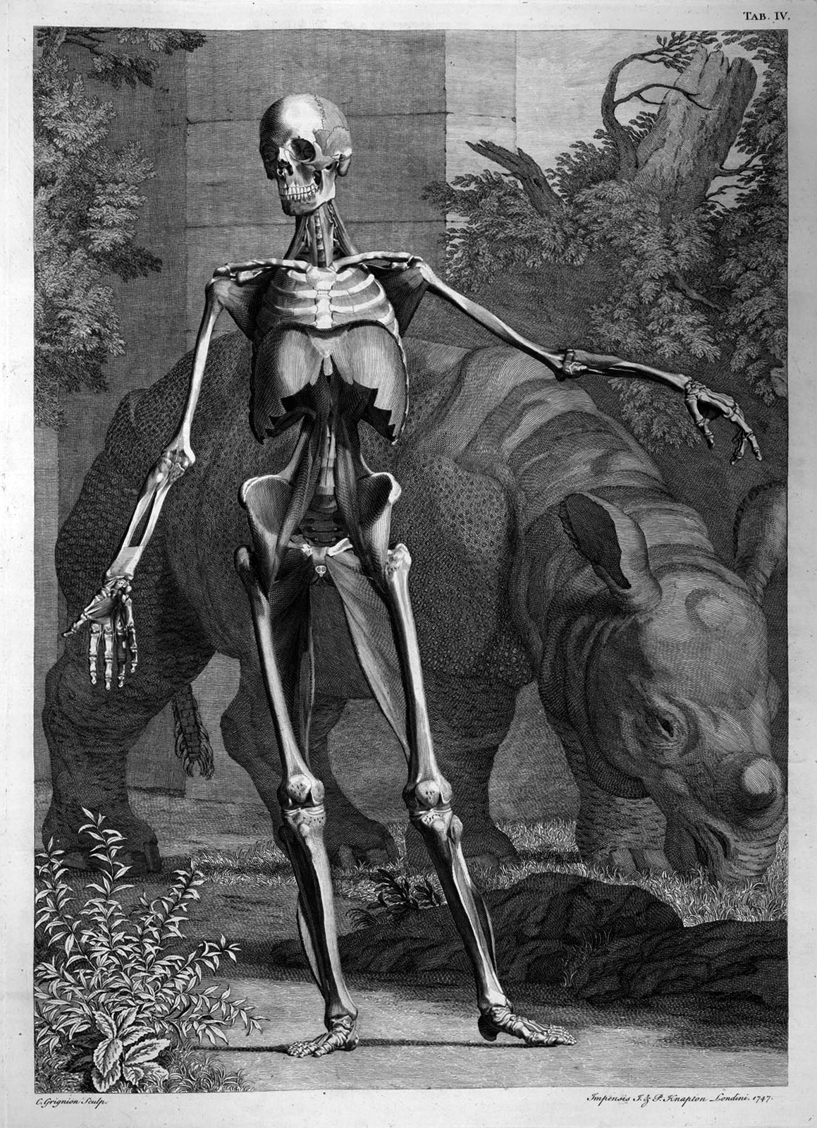 """BERNHARD SIEGFRIED ALBNUS, """"Índice do esqueleto e músculos do corpo humano"""" (1749)"""