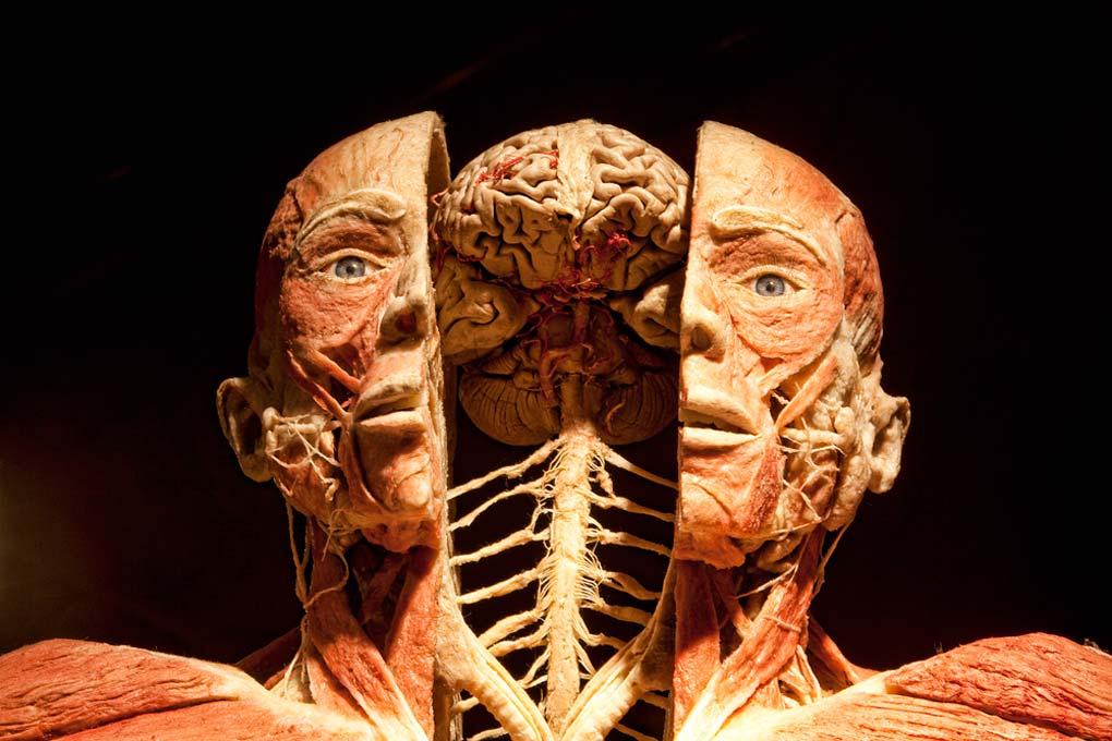 GUNTER VON HAGENS, cadáver plastinados