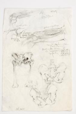 GUSTAVOT DIAZ (estudo de anatomia em cadáver)